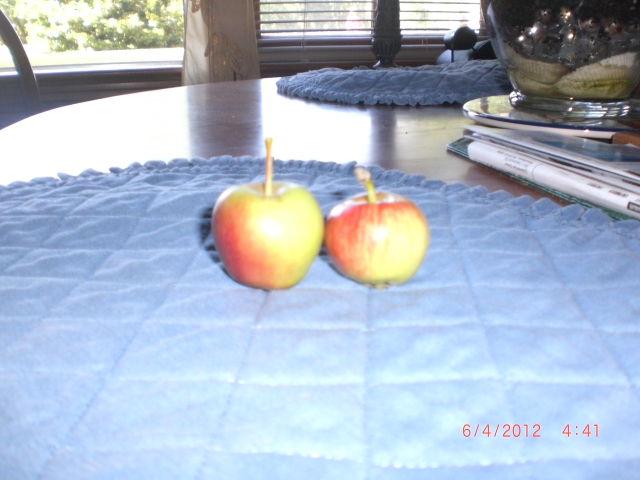 Tiny apples