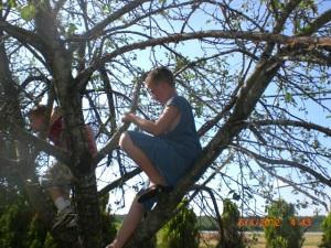More short men in tree