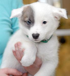 031413-blog-pet-toxins-275x300