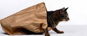 let-the-cat-out-the-bag